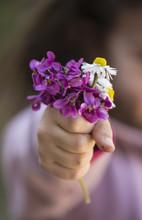 Bouquet De Violettes Et Pâque...