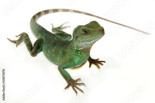 Cuadros en Lienzo Chinese Water Dragon
