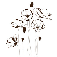 Fototapeta Poppy design, floral background