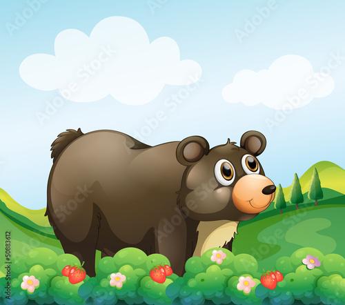 Wall Murals Bears A big brown bear in the garden