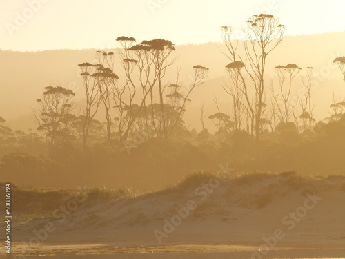 Spoed Foto op Canvas Bos in mist Tasmanian temperate rain forest