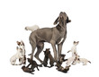 Great Dane standing in the middle of cats playing