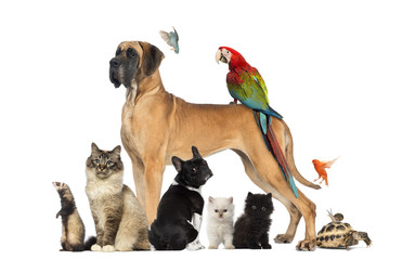 FototapetaGroup of pets - Dog, cat, bird, reptile, rabbit,...