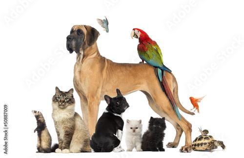 Group of pets - Dog, cat, bird, reptile, rabbit,... - 50887009