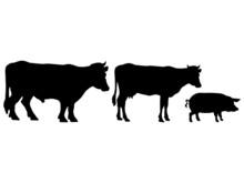 Boeuf Vache Cochon