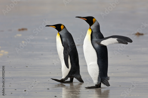 two king penguins on the beach