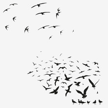 Pack Of Seagulls And Swallows
