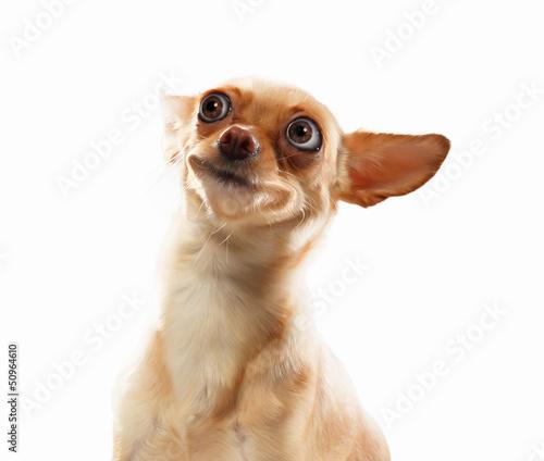 Funny dog portrait Canvas Print