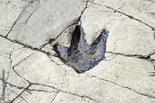 Fossilized dinosaur footprint