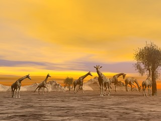 Naklejka Giraffes in the savannah - 3D render