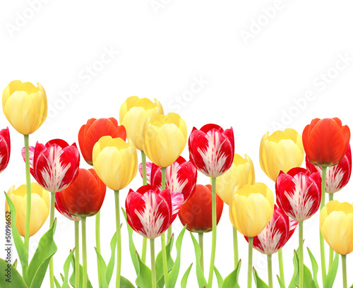 Fototapety, obrazy: Tulips