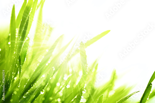 Fresh grass and sunlight