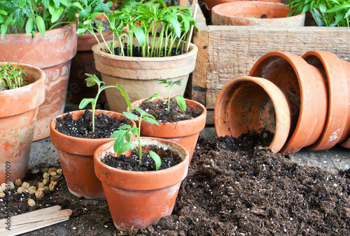 Stampa su Tela planting