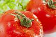 Wet tomato detail