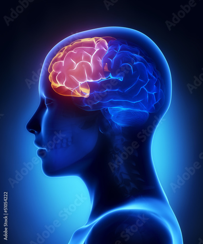 Frontal lobe - female brain anatomy lateral view Canvas Print