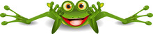 Funny Frog Is On His Stomach