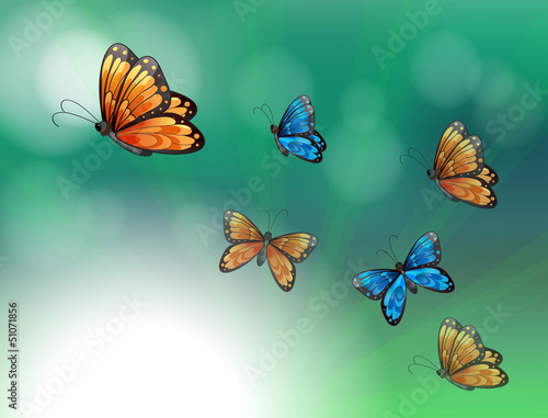 Fotobehang Vlinders A stationery with orange and blue butterflies