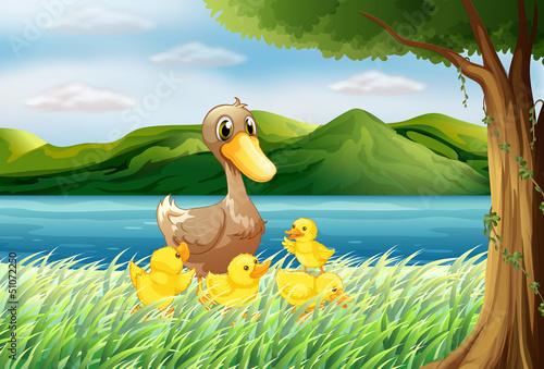Canvas Prints River, lake Five ducks at the riverbank