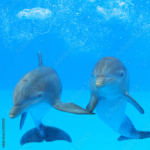 Two dolphins in the water