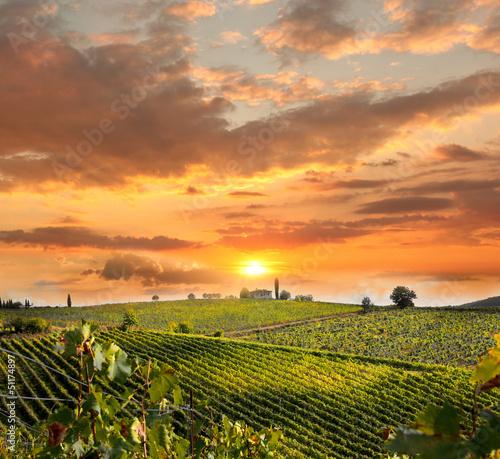 Chianti, famous vineyard in Italy