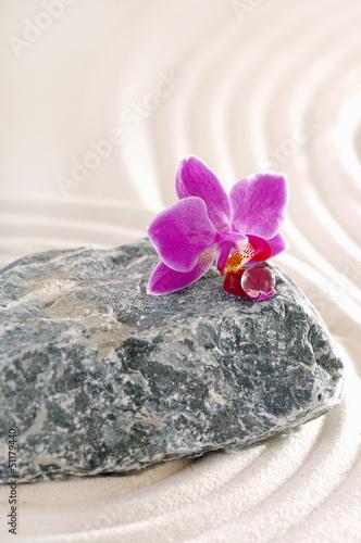 orchidea-na-kamieniu-ze-sladami-piasku