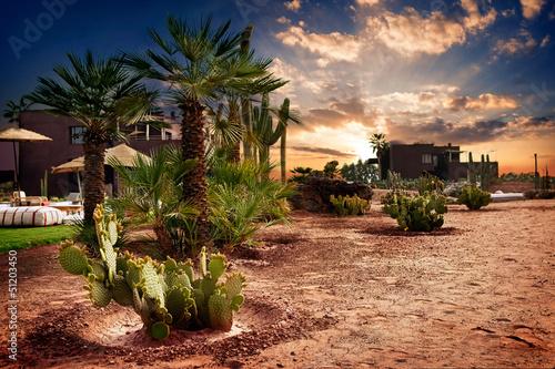 Papiers peints Maroc Oasis in Morocco