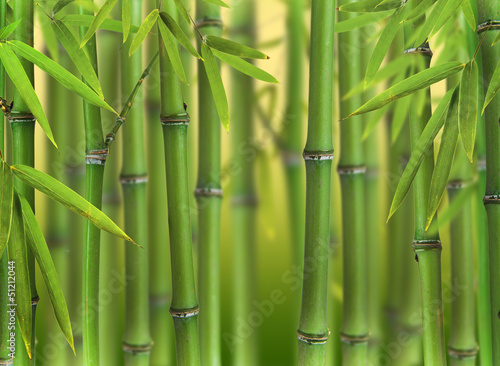 Foto op Canvas Bamboo Bamboo sprouts forest