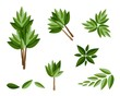 A Set of Isometric Evergreen Trees and Plants