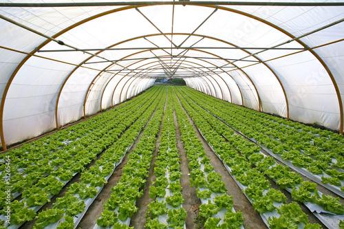 Photo invernadero agricultura 3565f