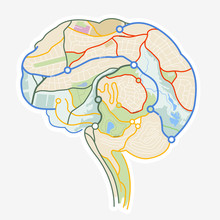 Brain Map. An Illustration Of ...
