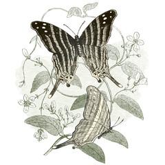 Fototapeta na wymiar Les papillons