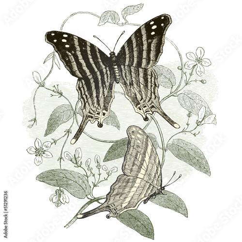 Obrazy na płótnie Canvas Les papillons