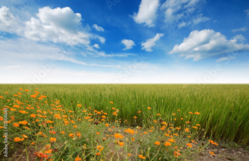 green grass blue sky flowers sky rainbow green grass blue sky flower rainbow buy this stock photo and