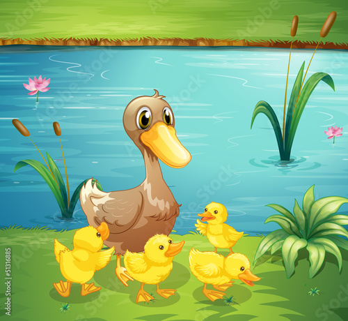 Poster Rivier, meer A mother duck with her ducklings in the river