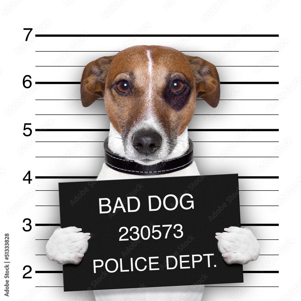 Fototapeta mugshot dog