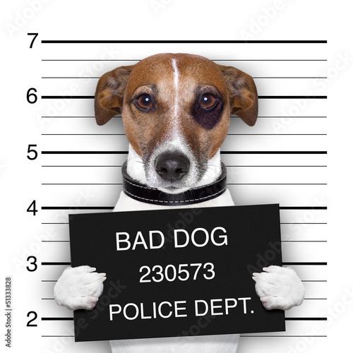 Obraz Pies przestępca - fototapety do salonu