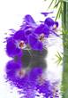 orchidée sur pierre