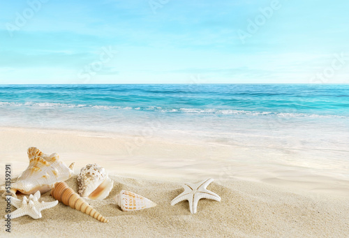 Foto-Kissen - Landscape with shells on tropical beach (von silvae)