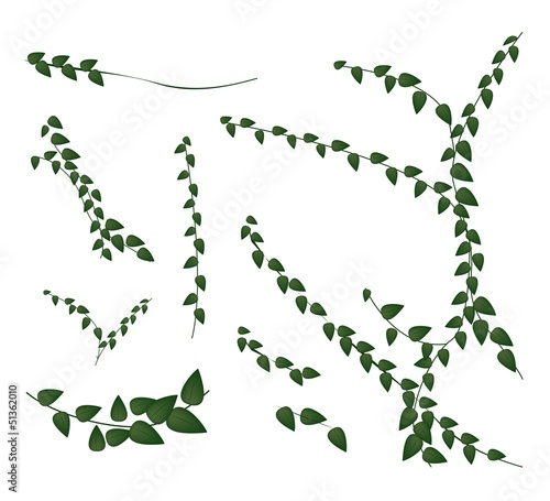 Canvas Print A Set of Creeper Plant on White Background