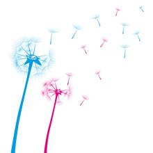 Dandelion Vector Blue Pink