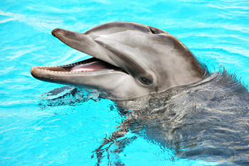 Fototapeta Friendly dolphin