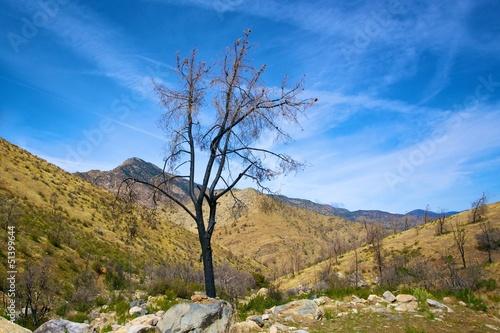 Fotografía  Burned Tree in Sequoia Forest