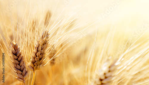 Photo Stands Culture Wheat field