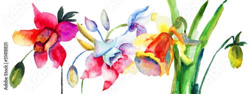piekne-letnie-kwiaty