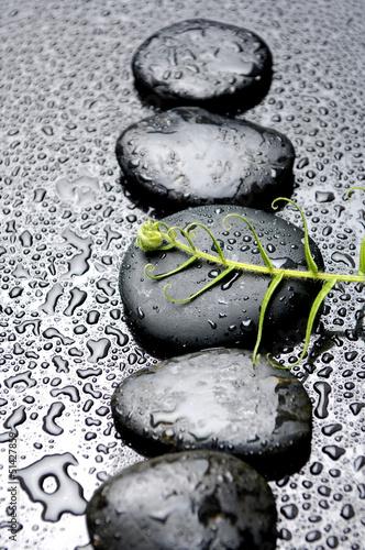rzad-zen-kamienie-i-zielona-paproc-z-wodnymi-kroplami