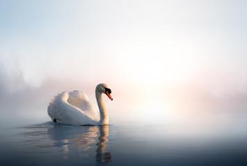 Fototapeta na wymiar Art Swan floating on the water at sunrise of the day
