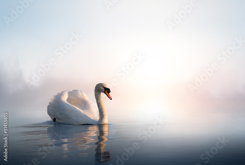 Deurstickers Zwaan Art Swan floating on the water at sunrise of the day
