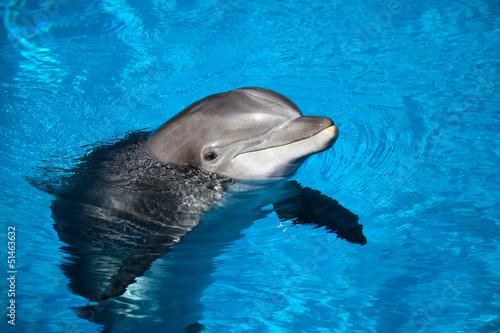 In de dag Dolfijn Dolphin