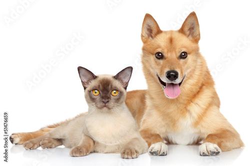 Happy dog and cat together © jagodka