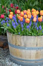 Orange Tulip Planter